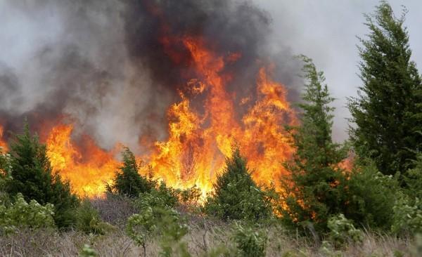 ВЧелябинской области потушили три лесных пожара