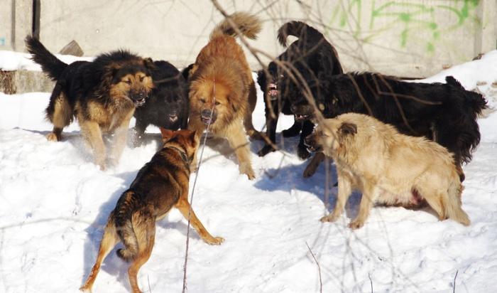 Собаки сгрызли 9 летнюю девочку в махачкале