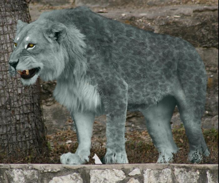 Впещере Иманай ученые обнаружили кости 10 большущих пещерных львов