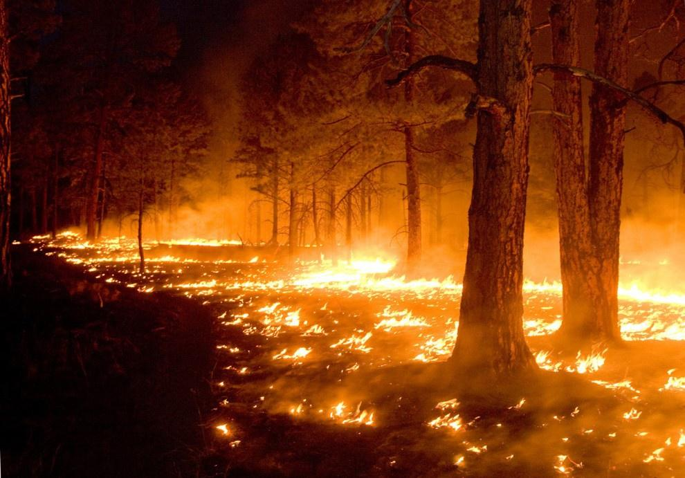 haze causality and forest fires