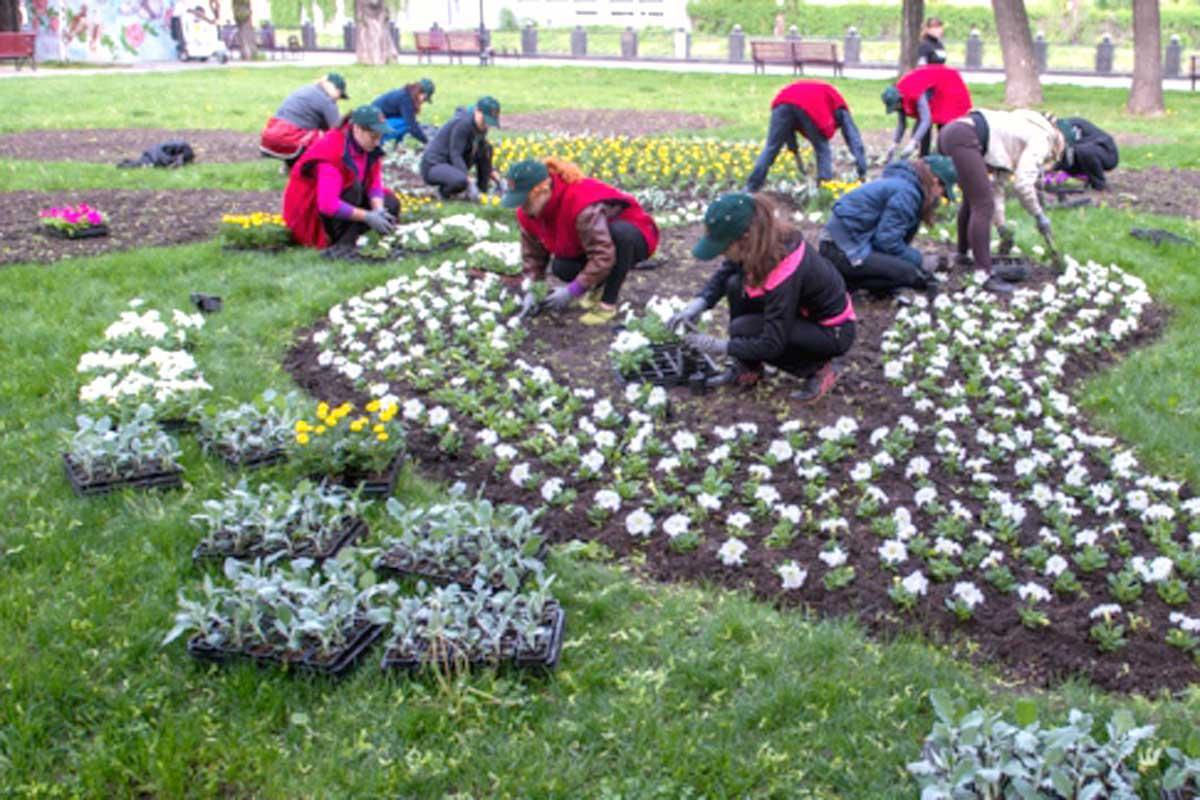 Что за цветы сажают в парках 880