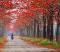 Удивительные деревья и кустарники в цвете (фото)