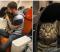 «Аэрофлот» лишил пассажира авиабонусов за провоз толстого кота