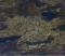 Опубликована новая фотография Екатеринбурга из космоса