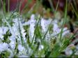 Заморозки на Урале продлятся до 3 июня