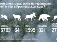 Greenpeace: от лесных пожаров в Сибири пострадали 13 тыс. особей животных