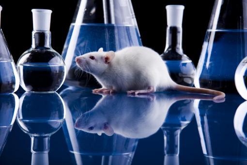 Британским учёным удалось создать эмбрион мыши из стволовых клеток