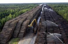 В Свердловской области начнут вырубать больше лесов