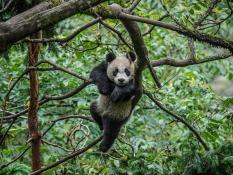 Лучшие фото, опубликованные журналом National Geographic в июле 2016 года (фото)