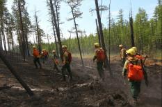 Рослесхоз оценил ущерб от лесных пожаров в 7 млрд. рублей