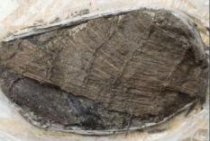В Швейцарии нашли ботинок возрастом 5 тыс. лет