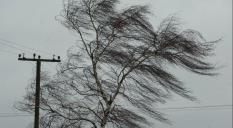 Неделя на Среднем Урале начнется с заморозков и сильного ветра