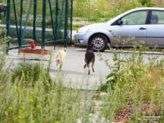 На улицы уральской столицы выпустили бездомных собак
