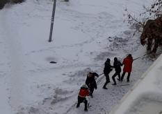 Два сбежавших из цирка слона прогулялись по Екатеринбургу