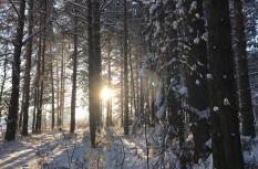 В ближайшие дни на Среднем Урале потеплеет с -20 до +3 градусов