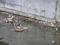 Со дна Исети достали тонны мусора