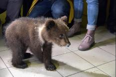 Спасенных уральских медвежат отправили на реабилитацию на Дальний Восток (фото)