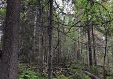 Липецкие леса закрыли для посещения из-за высокой пожарной опасности