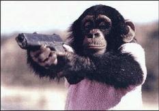 Протест как вариация политического поведения приматов