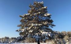 Синоптики рассказали о прогнозе на предстоящую зиму в России