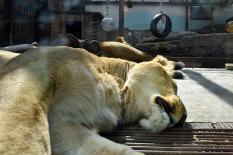 Животные екатеринбургского зоопарка выходят с карантина (фото)