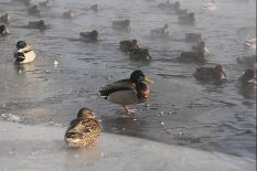 На этой неделе в Свердловской области потеплеет сразу до +2