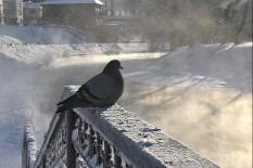 Январь 2021 года стал самым холодным на Урале за последние 15 лет