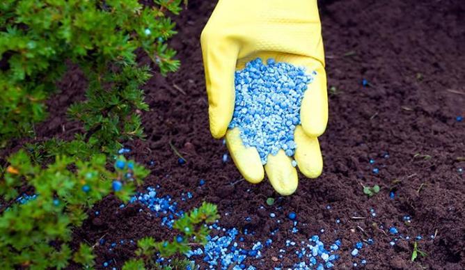 Лидия Пономарева: Есть ли альтернатива органическим удобрениям? (Мифы о выращивания экологически безопасных овощей с применением органических удобрений)