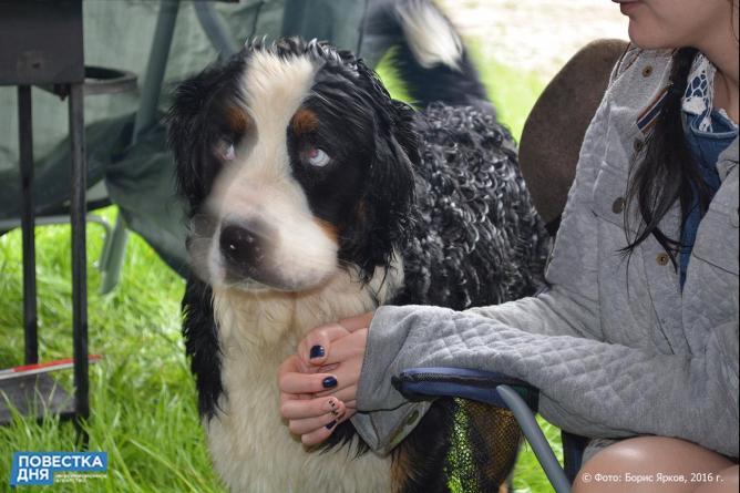 Жительница Алапаевска отсудила 10 тыс. за укус собаки