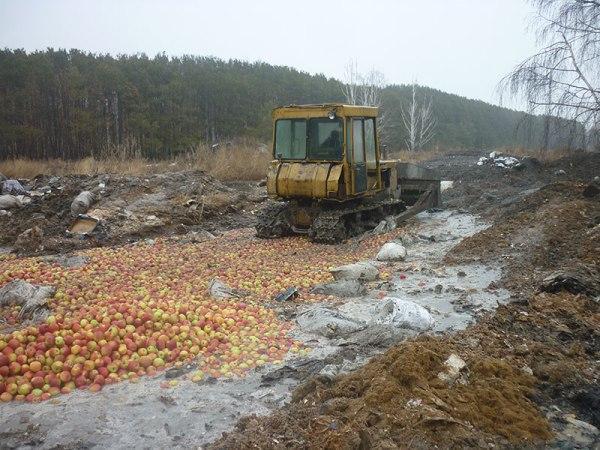 В Челябинске «раскатали» 23 тонны польских яблок