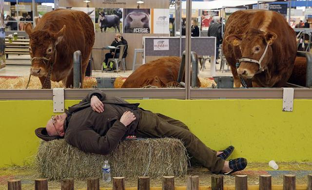 Фермер дремлет на ежегодной сельскохозяйственной ярмарке